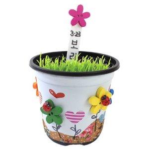 [오피시나] 꽃단추 보리화분 만들기